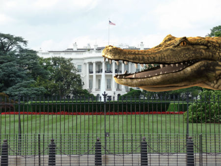 crocodile prepares to eat the White House